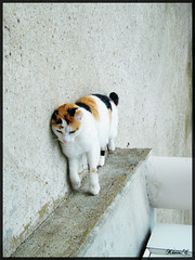 Chat couché (mais debout ?) by Kévin.C, on Flickr