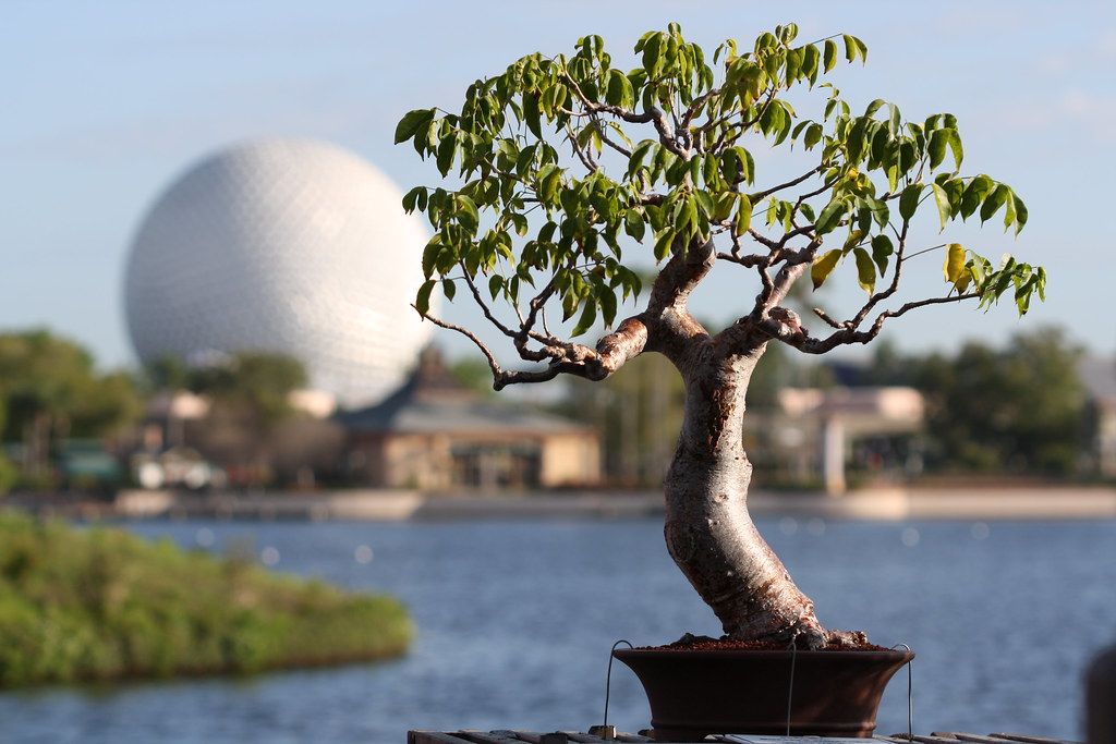 Beginner tree for New York? 3435625949_f8b92167ce_b