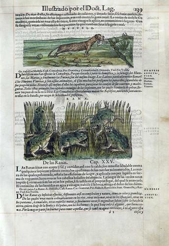 009-Las ranas- Pedacio Dioscorides Anazarbeo 1555