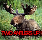 two antlers up