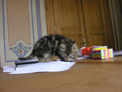 A papír...