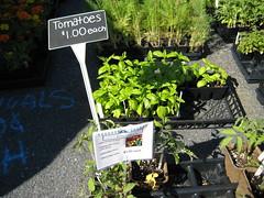 Damascus High School Future Farmers of America Tomato Plants (Robert Dyer) Tags: plant tomato sale farm farming maryland farmer agriculture mountairy chapter mtairy ffa montgomerycounty heirloomtomato futurefarmersofamerica damascushighschool rainbowtomato