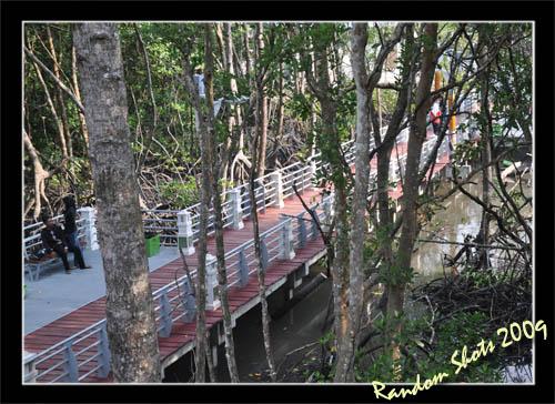 Mangrove 5