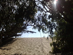 back to the path (juanita) Tags: fortfunston n95