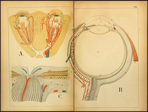 An atlas of Anatomy (FF Miller, 1879) c