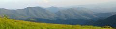 Jane Bald Panorama (BlueRidgeKitties) Tags: blue panorama mountain mountains green yellow landscape spring tennessee bald may northcarolina landschaft blueridgemountains appalachiantrail photostitch grassy appalachianmountains appalachians westernnorthcarolina roanmountain southernappalachians ccbyncsa roanhighlands canonpowershotsx10is appalachianbalds