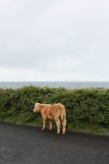 IMG_5077 (mkairishstudies) Tags: 2010 cliffsofmohr mka lehinch irishstudies themontclairkimberleyacademy irishstudies2010