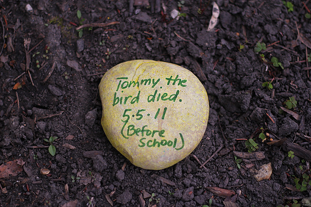 Tommy the Bird