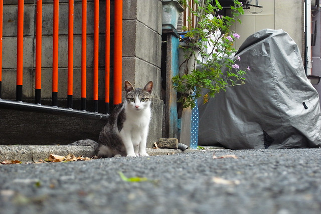 Today's Cat@2011-05-17