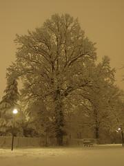 la grande quercia (seba82) Tags: winter parco snow oak olympus neve aldo inverno piazzale secular protected silario quercia salati sebastiano protetta secolare denza aoro seba82