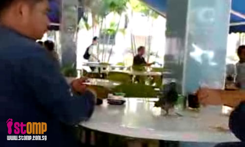 Crazy pigeon is not afraid of people and steals food from their plates