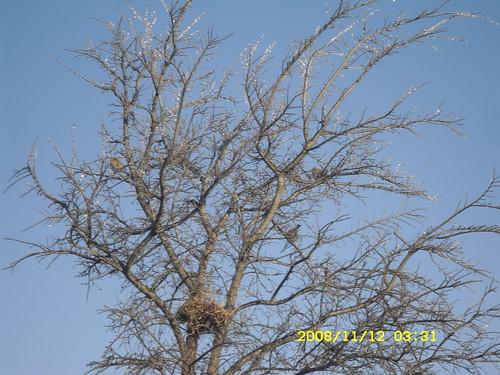 birdsicetree