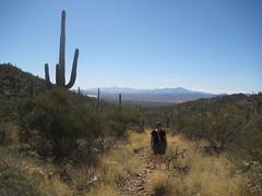 IMG_1887 (Puggeroni) Tags: tucson saguaronationalpark