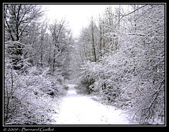 Neige en fort (Brn@rd) Tags: trees winter blackandwhite white snow france cold color tree ice nature colors bernard forest french frozen nikon europe frost noir noiretblanc couleurs hiver foliage arbres coolpix neige paysage foret arbre blanc soe froid franais couleur feuilles glace givre feuille p4 valdoise feuillage supershot presles mywinners abigfave platinumphoto impressedbeauty aplusphoto coolpixp4 gaillot citrit ysplix goldstaraward rubyphotographer bernardgaillot brnrd