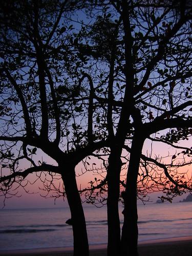 nature black beach favorites trees sunset dusk dawn/dusk