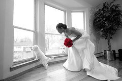 No Love Lost (RICHBRAT) Tags: door new york flowers wedding shadow red bw dog white motion black love window public digital canon magazine out puppy rebel xt bride movement dress time no tail move laugh weddings bridal hahaha alert weddinggown canondigitalrebelxt bridalexpo selectivecoloring sigma1022mm newyorkwedding bridalmagazine