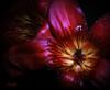 Kapok Tree Flowers (FLPhotonut) Tags: red flower canonrebelxt kapok buttergarden flphotonut