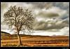 Árbol solitario (Josepargil) Tags: