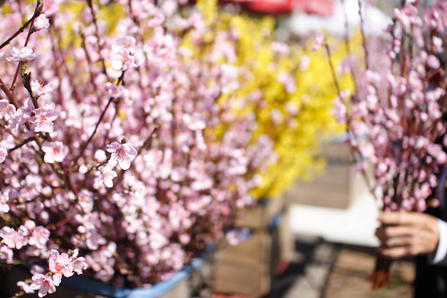 blossoms for sale