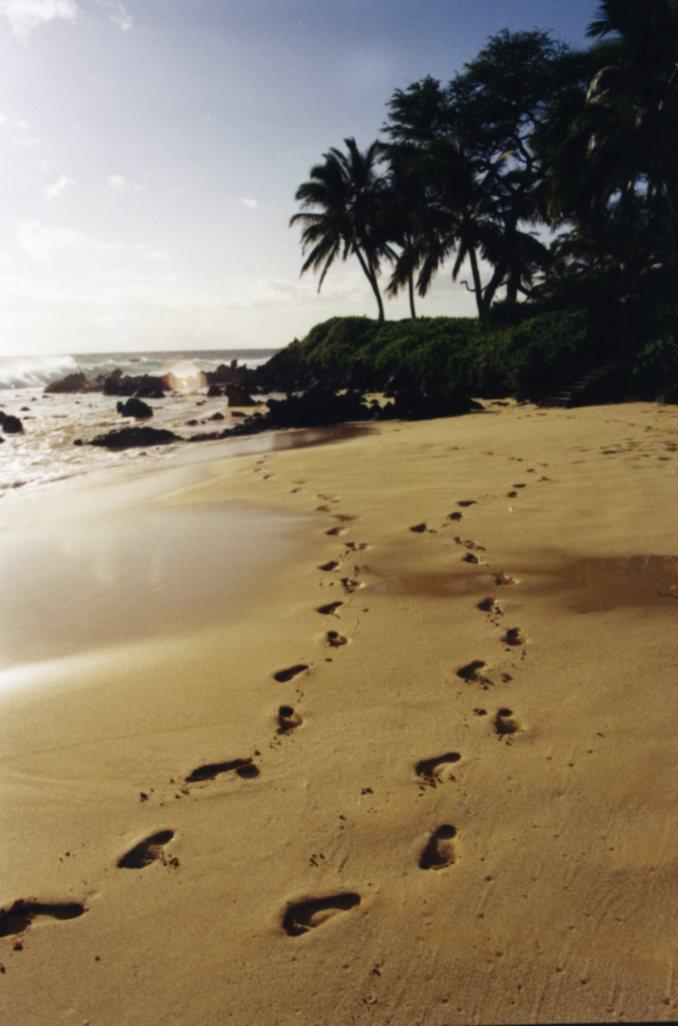 Maui News Today Video