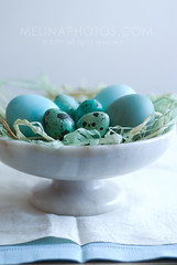 dawn easter (mwhammer) Tags: foodandpropstyling melinahammer traditional robineggblue quail chicken freeroaming gourmet sweet lyrical lullaby delicate stilllife eggs easter morning texture color design elegant