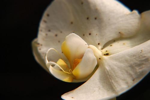 Орхидеи и уход за ними на webbish блог о