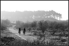 Kennemerduinen (Hendrik Weiler) Tags: zwartwit duinen kennemerduinen fietser adox