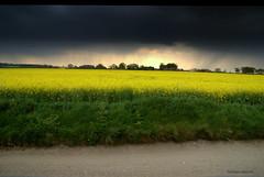 Yellow Mellow........ (Nicolas Valentin) Tags: england storm weather yellow scenery co