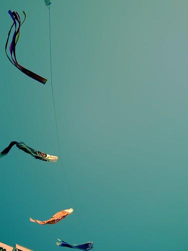 ko-i-no-bo-ri (carp banners) swim in the sky