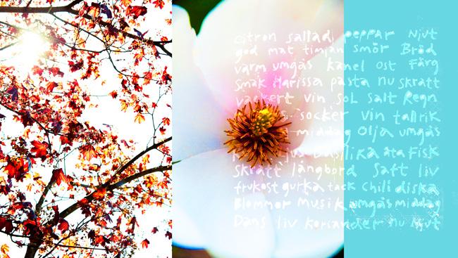 rönn och magnolia