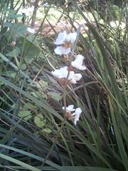 IMAG0010 (Ian Faz) Tags: flowers plants tress nessgardens
