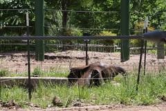 Louisville Zoo 053 (cellophane303) Tags: louisvillezoo