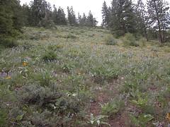 Early meadow.JPG