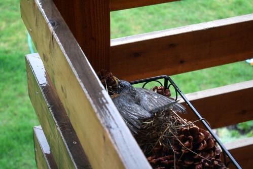 Nest in Rain
