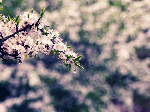 Primavera de nostalgia