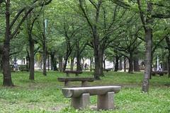 緑のなかの椅子