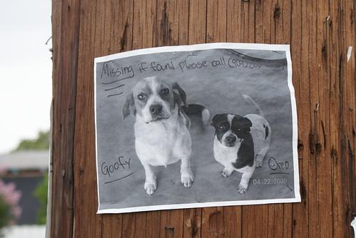 Lost pups