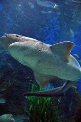 Melbourne 2009 - Melbourne Aquarium (11)