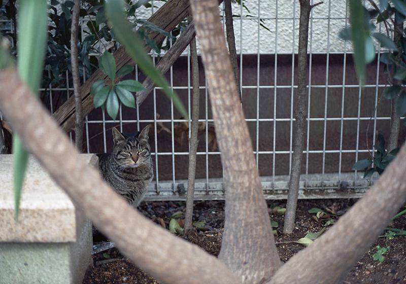 小さい公園の猫