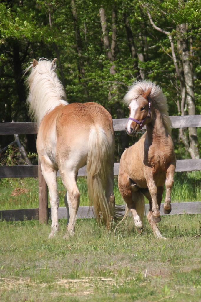 horses 209x