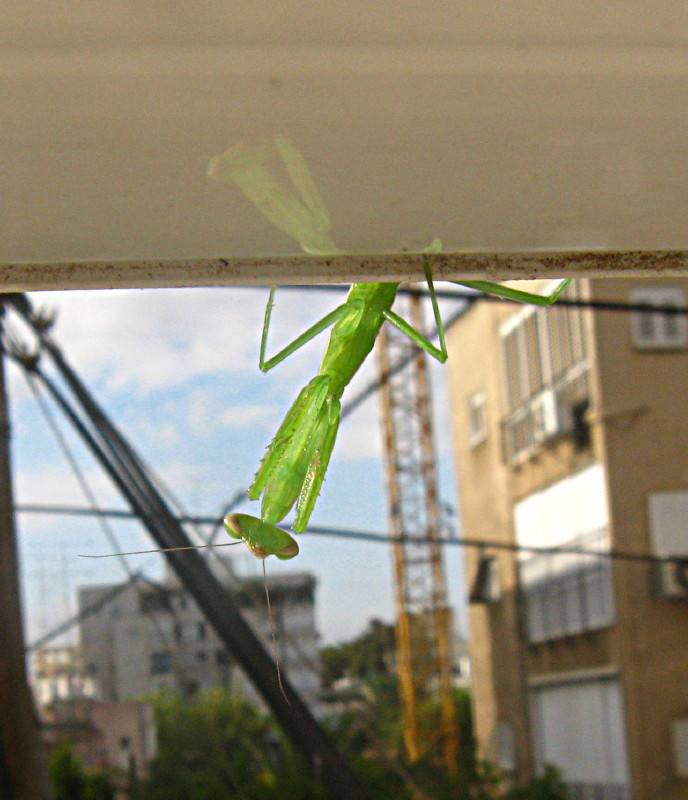 24-05-2010-grasshopper6