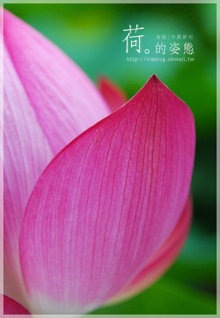 【2010賞荷】南投中興新村~荷花(蓮花)池準備盛放!14