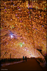 Tunnel of lighting (Pacifist) Tags: winter japan illumination tunnel shizuoka gotemba  tokinosumika  20082009 tokina1116