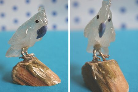 A004 - White with blue beak on stone (2)