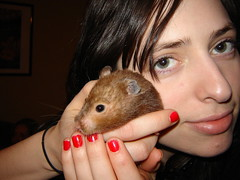 Dear Prudence (bleudreams) Tags: hamsters smallanimals