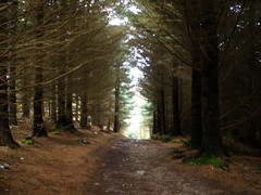 Djouce Woods, Co. Wicklow (St.Stello) Tags: pinky cowicklow djoucewoods