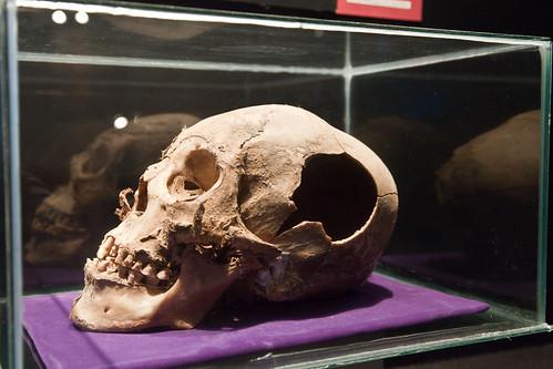 Inca Skull