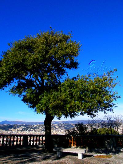 chateau_olivetree