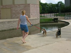 Where there is water, there is a dog interested in jumping in it. (colorblindPICASO) Tags: park dogs water sarah out walking concrete ginger stream stage blackdog blond barefoot browndog barefeet pokey amphitheater cutedogs collegestation leashes walkingthedogs jeanshorts wpc khaos grayshirt wolfpencreekpark