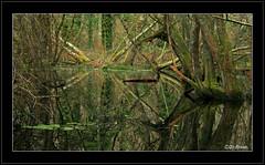 Jungle indobreizhienne 2 (jo.pensel) Tags: france nature landscape photo bretagne breizh arbres jungle paysage forêt bois environnement bzh finistère pensel wildworld capsizun zonehumide jopensel